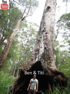 #BenEtTiti #Australie #BenAndTiti #Australia #backpacker #backpacking #aventure #Walpole #Australife #Osezlaustralie #WA #Aussie #BenEtTitiInAussie #voyage #voyageenaustralie #lifestyle #WesternAustralia #ValleyoftheGiantsTreetopWalk #ValleyoftheGiants #TreetopWalk #Nornalup